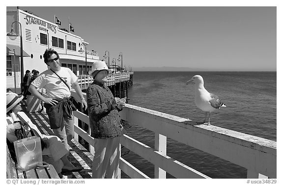 Tourists looking at a seagull on the wharf. Santa Cruz, California, USA (black and white)