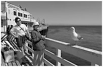 Visitors looking at a seagull on the wharf. Santa Cruz, California, USA (black and white)