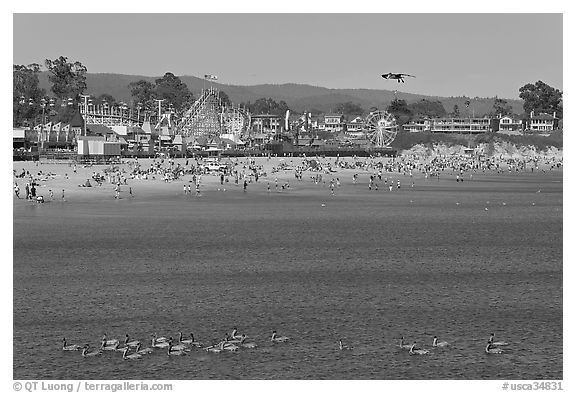 Pelicans, beach, and amusement park. Santa Cruz, California, USA (black and white)