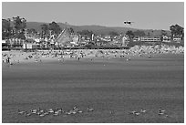 Pelicans, beach, and amusement park. Santa Cruz, California, USA ( black and white)