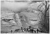 Residents visiting Joseph Grant Park after a rare snowfall. San Jose, California, USA (black and white)