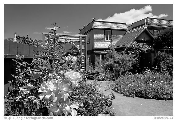 Roses in backyard. Winchester Mystery House, San Jose, California, USA (black and white)
