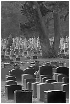 Dense headstones in cemetery, Colma. California, USA (black and white)