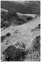 Rocks, poppies, and hillsides, Sunol Regional Park. California, USA ( black and white)