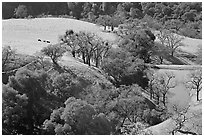 Pastoral scene with cows, trees, and pond, Sunol Regional Park. California, USA ( black and white)