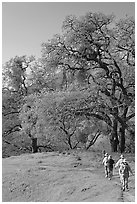 Group of hikers on faint trail, Sunol Regional Park. California, USA ( black and white)