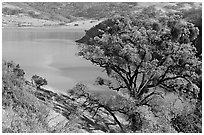 Calaveras Reservoir in spring. California, USA (black and white)