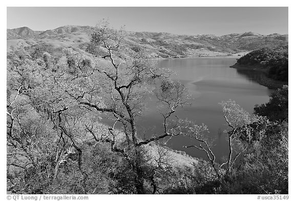 Oak Trees and Calaveras Reservoir. California, USA (black and white)