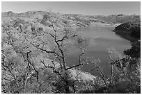 Oak Trees and Calaveras Reservoir. California, USA ( black and white)
