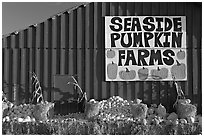 Seaside pumpkins farms sign on red barn. California, USA (black and white)