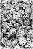 Small squashes. California, USA (black and white)