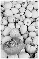 Small squashes and pumpkins. California, USA (black and white)