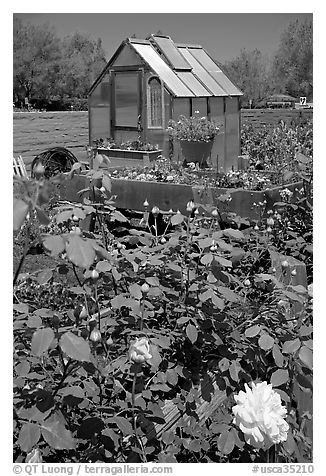 Flowers and small greenhouse, Sunset Gardens. Menlo Park,  California, USA (black and white)