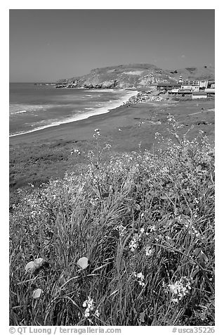 Wildflowers and and Rockaway beach, Pacifica. San Mateo County, California, USA (black and white)