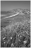 Wildflowers and and Rockaway beach, Pacifica. San Mateo County, California, USA ( black and white)