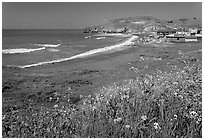 Rockaway Beach and wildflowers, Pacifica. San Mateo County, California, USA (black and white)