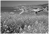 Yellow mustard flowers, beach and highway, Pacifica. San Mateo County, California, USA (black and white)
