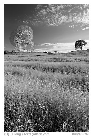 150 ft Antenna and tree, Stanford academic preserve. Stanford University, California, USA (black and white)