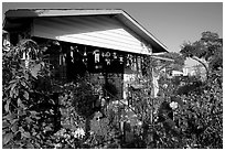 House and frontyeard, Watts. Watts, Los Angeles, California, USA ( black and white)