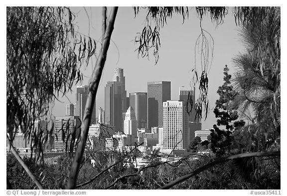 Downtown skyline seen through trees. Los Angeles, California, USA (black and white)