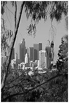 Skyline through trees. Los Angeles, California, USA (black and white)