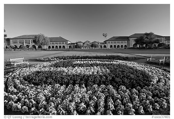 Stanford University S logo in flowers and main Quad. Stanford University, California, USA (black and white)