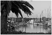 Palm tree and marina. Redwood City,  California, USA ( black and white)
