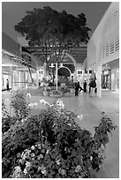 Vegetation and stores in main alley of Stanford Mall at night. Stanford University, California, USA ( black and white)