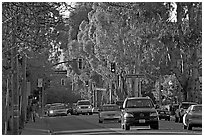 El Camino Real bordered by Eucalyptus trees. Burlingame,  California, USA (black and white)