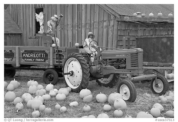 Green tractor, pumpkins, figures, and barn. Half Moon Bay, California, USA
