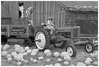 Green tractor, pumpkins, figures, and barn. Half Moon Bay, California, USA (black and white)