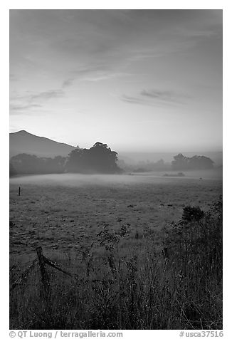 Pasture with fog at sunset. San Mateo County, California, USA (black and white)