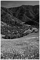El Portal below fields of wildflowers. El Portal, California, USA (black and white)