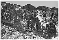 Trees and peaks with fresh snow. California, USA ( black and white)