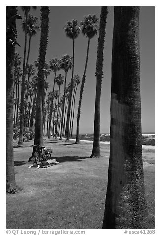 Man with bicycle laying on grass bellow beachside palm trees. Santa Barbara, California, USA