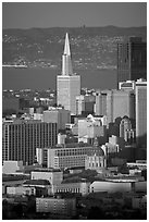 City Hall and Transamerica Pyramid, late afternoon. San Francisco, California, USA ( black and white)