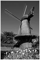 Tulips and Historic Dutch Windmill, Golden Gate Park. San Francisco, California, USA ( black and white)