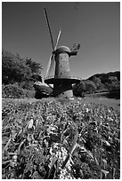 Spring flowers and old windmill, Golden Gate Park. San Francisco, California, USA (black and white)