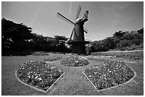 Spring flowers and old Dutch windmill, Golden Gate Park. San Francisco, California, USA ( black and white)