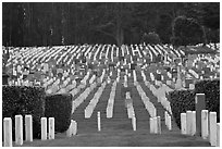 San Francisco National Cemetery, Presidio of San Francisco. San Francisco, California, USA (black and white)