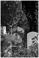 Headstones in the garden of Mission San Francisco de Asis. San Francisco, California, USA ( black and white)