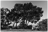 Buena Vista Park. San Francisco, California, USA (black and white)