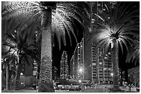 Palm trees and Embarcadero Center at night. San Francisco, California, USA (black and white)