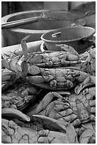 Close-up of crabs, Fishermans wharf. San Francisco, California, USA ( black and white)
