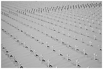 Sea of white and red crosses on Santa Monica beach. Santa Monica, Los Angeles, California, USA (black and white)