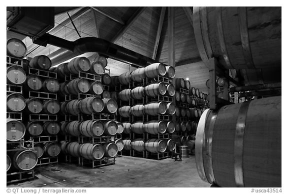 Wine barrels in aging room. Napa Valley, California, USA (black and white)