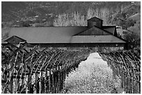 Winery in spring with yellow mustard flowers. Napa Valley, California, USA (black and white)