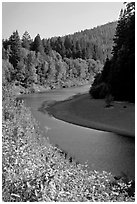 Eel River near Avenue of the Giants. California, USA (black and white)