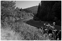 Riverbend of the Eel in redwood forest. California, USA (black and white)
