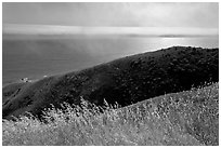 Summer grasses, hill, and ocean shimmer. Sonoma Coast, California, USA (black and white)